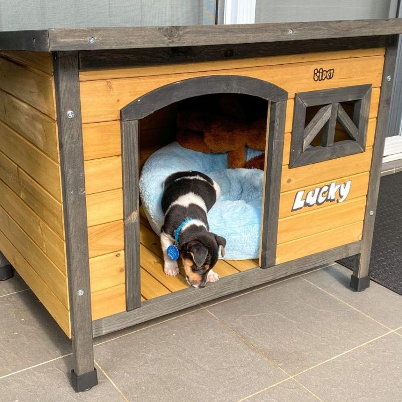 Basic Steps to Build the Insulated Dog House