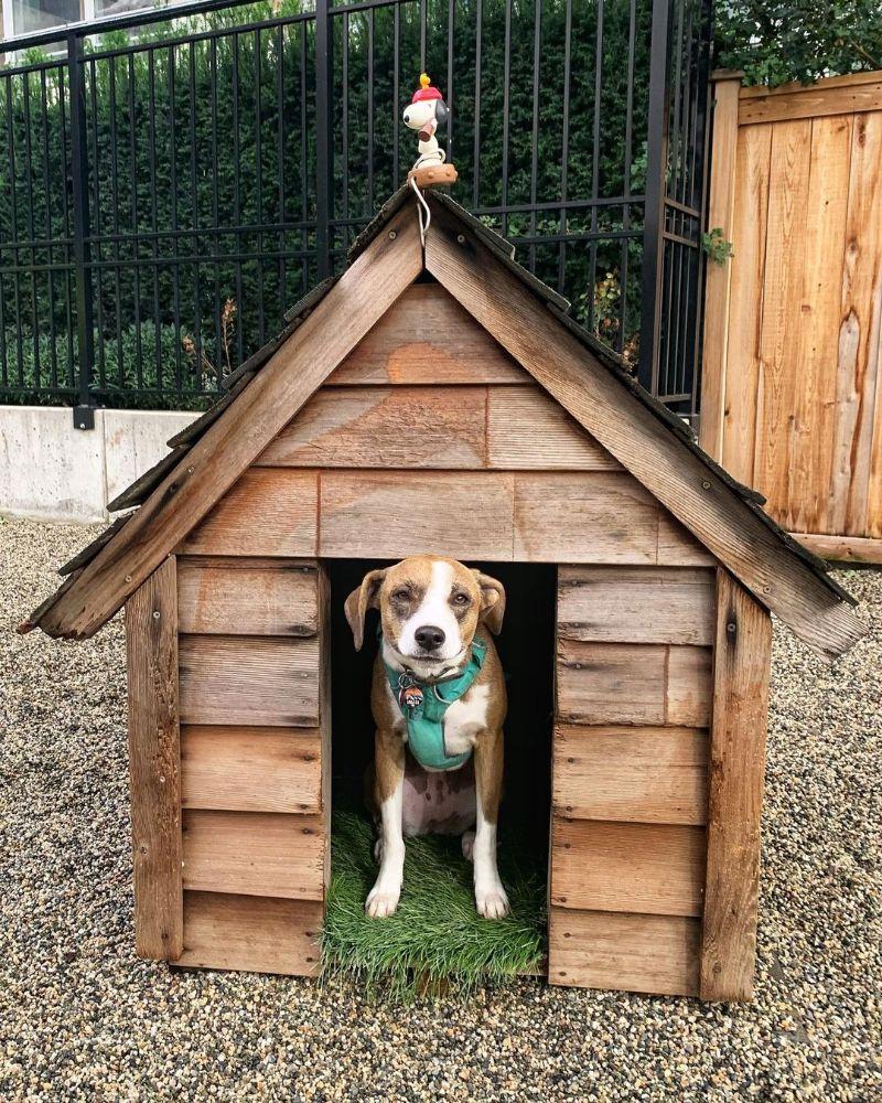 Learn How to Build a DIY Dog House