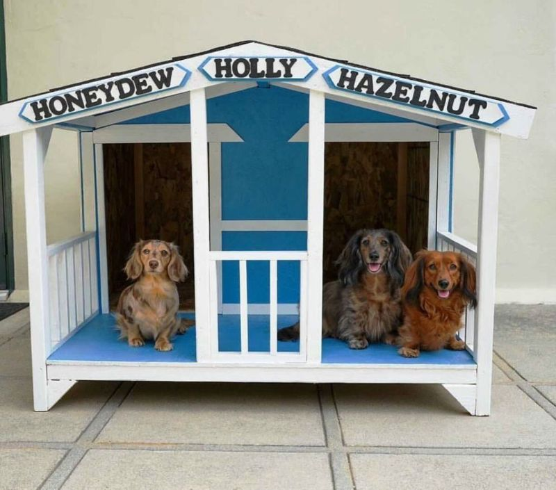 Things to Add to Idealize the Dog House